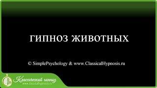 """""""Гипноз"""" животных (отрывок из обучающего видео для online курса по гипнозу и гипнотерапии)"""