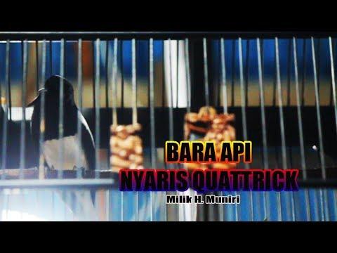 Burung Juara: Kacer Bara APi Milik H. Muniri Nyaris Quattrick  Di Pesona Tanjung CUP 1
