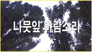 자연의소리 -나무잎바람소리 -힐링 사운드 자연 asmr