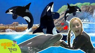 [엘리가 간다] 바다동물의 천국 미국 샌디에고 씨월드에서 돌고래와 함께 헤엄치기! l 엘리앤 투어