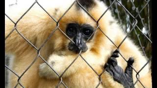 Hình thức sử dụng động vật hoang dã tại Việt Nam