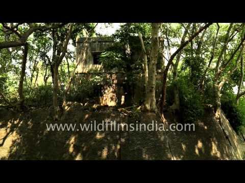 Remains of Kadamb Kunj, former hunting residence of Maharaja of Bharatpur