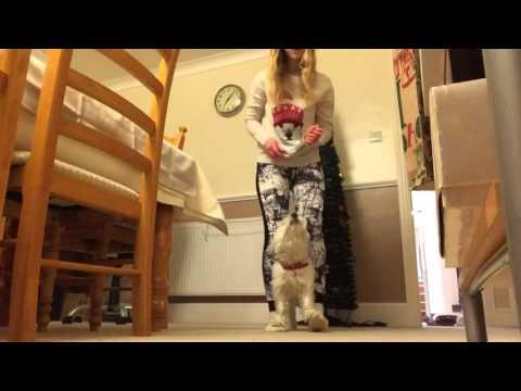 Christmas 2015 - dog tricks