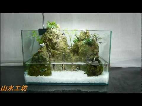 生態·教學·生態缸diy教學 – 青蛙堂部落格
