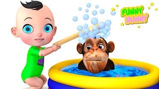 Funny Monkey bathes after cleaning