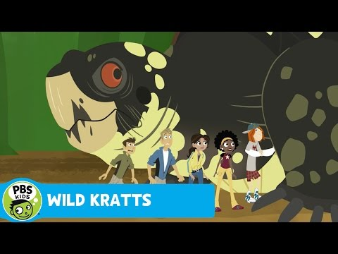 WILD KRATTS | Boxed In | PBS KIDS