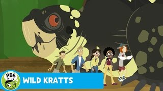 Wild Kratts: Boxed In thumbnail