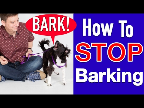 how-to-train-your-dog-to-stop-barking!