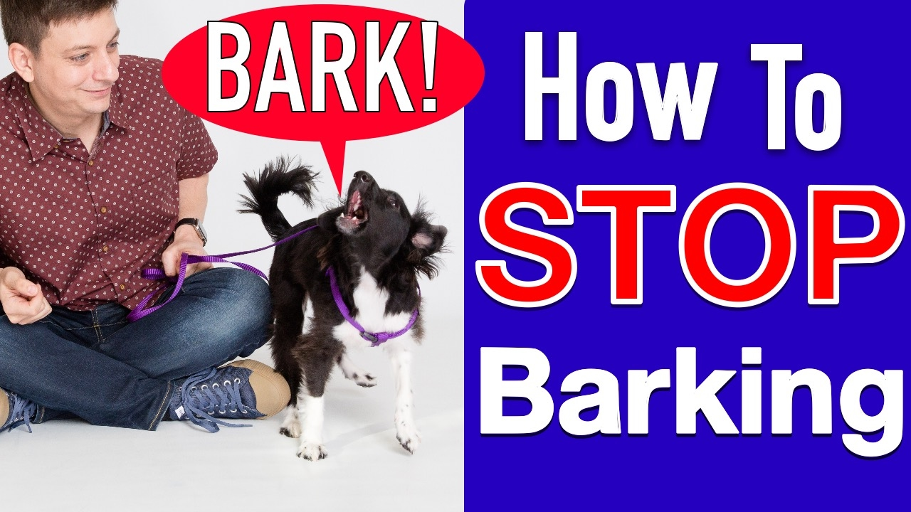 How To Train Your Dog To STOP BARKING!   YouTube