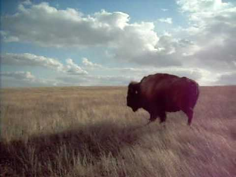 Jared Amason going to meet the Wild Buffalo's!