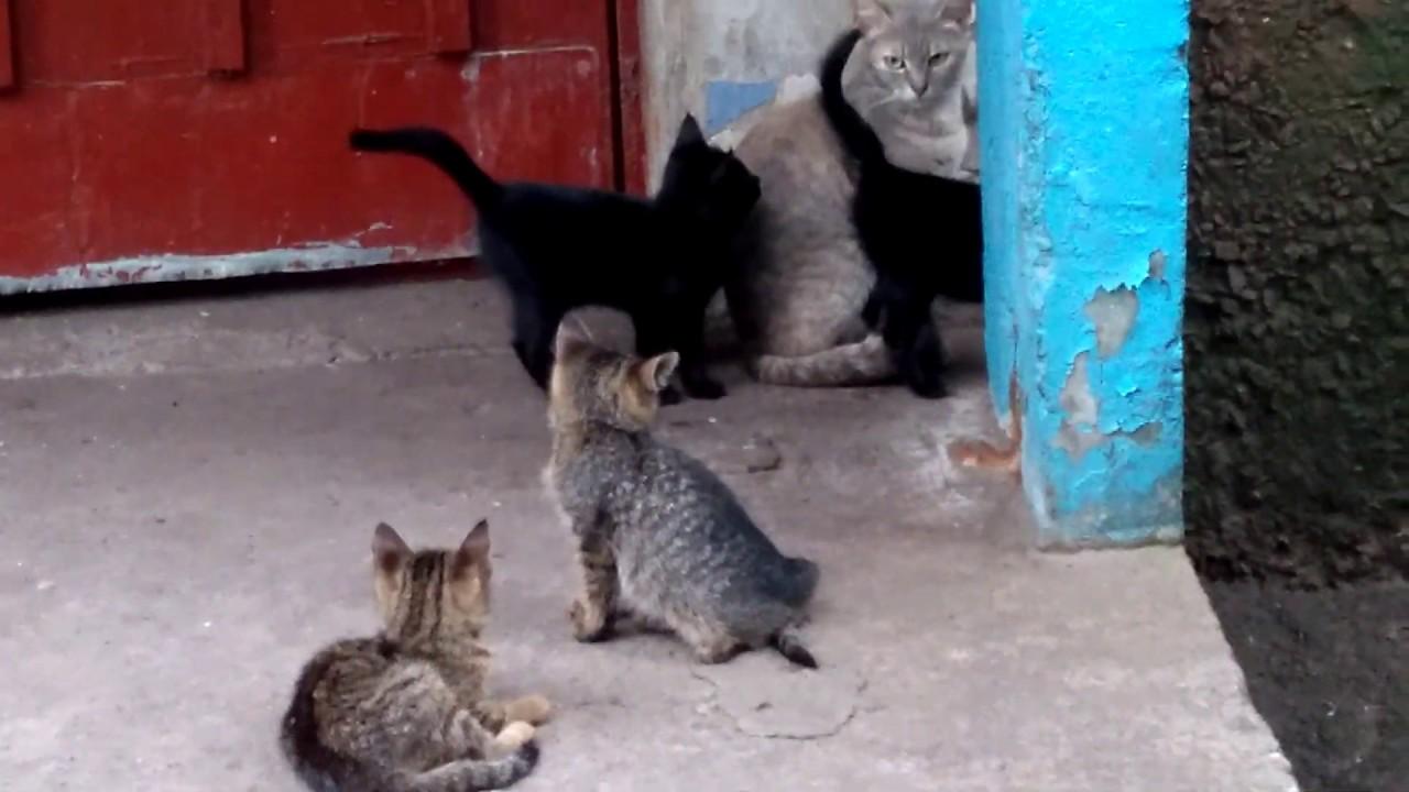 Кошка с котятами. Cat with kittens - YouTube