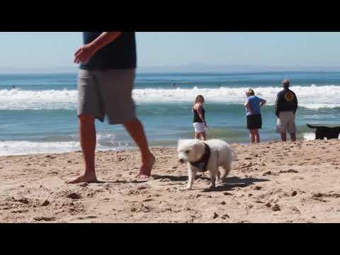 BEACHES: Huntington Dog Beach