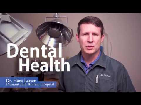 Pleasant Hill Oregon Veterinarian Pet Teeth Cleaning