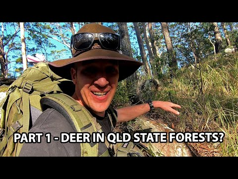 Part 1 - Searching for Deer in Queensland, Australia // Close encounter with a snake
