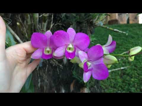Орхидеи на деревьях. Вьетнам Чамские башни.