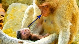 Broke My Heart!, New Baby Looking At His Mommy, Opening Little Eyes, Duchese Very Tired With Him