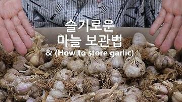 가장 오래가는 마늘 보관법~ 까기부터 보관까지 한번에~ [강쉪] garlic storage tips