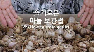 가장 오래가는 마늘 보관법~ 까기부터 보관까지 한번에~  garlic storage tips
