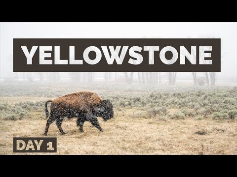 Springtime Wildlife Photography in Yellowstone - Day 1