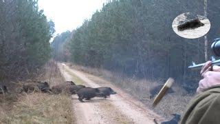 Drückjagd in Polen - polowanie na dziki- vildsvinsjakt - driven hunt Chasse Au Sanglier drivjakt