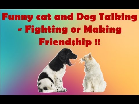 Animal communication : funny cat and dog talking - fighting or making friendship !!