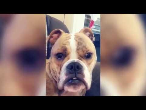Best Funny Cute Pets Compilation Ft  Dogs  Cats   Try Not To Laugh Funny Pet Videos 2019