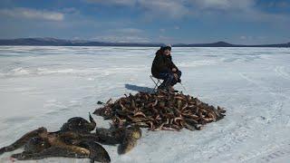 Большая рыбалка 2018 года на озере Орон в конце марта с сыном Подводное видео Десять дней рыбалки