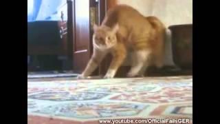 Engraçado   Compilação de Gatos Engraçados