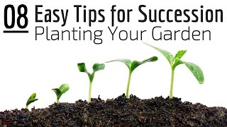 Easy Tips for Succession Planting in Your Garden