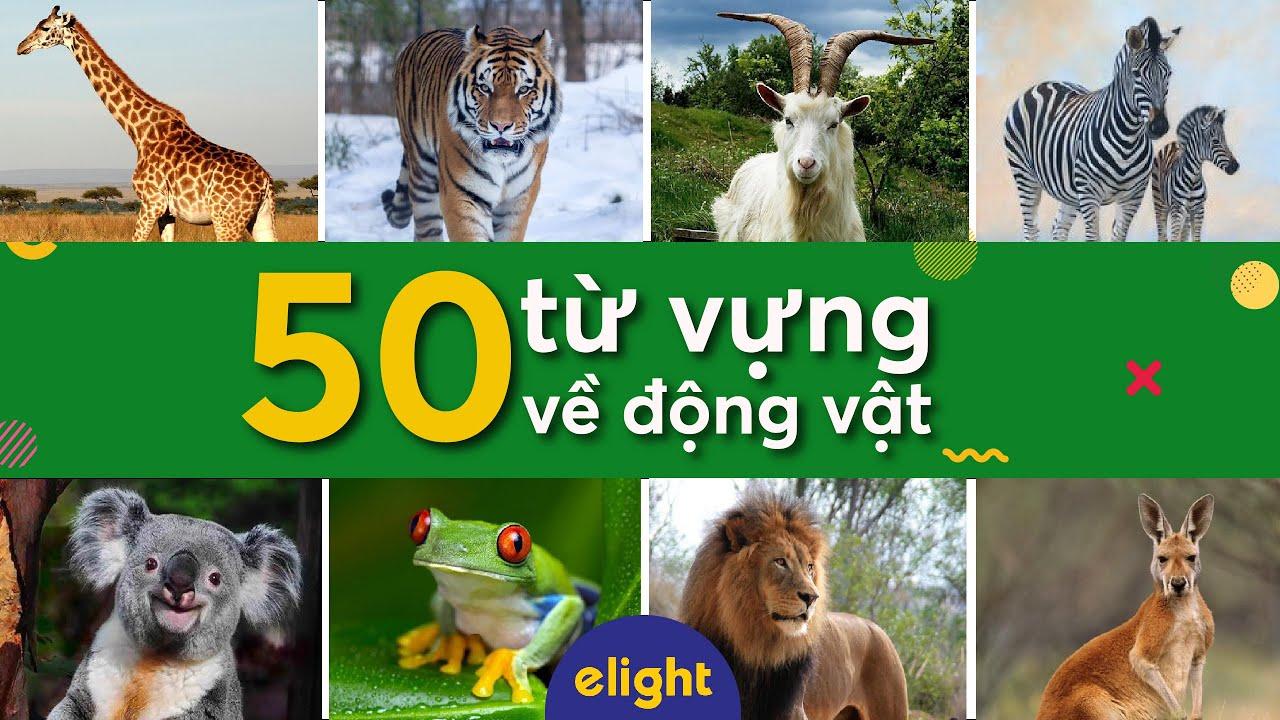 Elight | 50 từ vựng tiếng Anh về động vật (Animals) – Elight Vocab