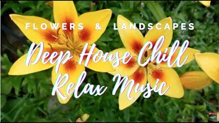 Flowers & Landscapes Deep House Relax Music -  Chill Relax Music, Hype Music, Upbeat Music ?? 29