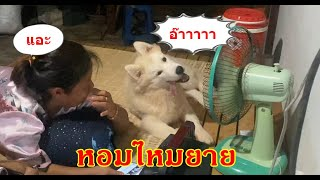 หมาอะไรนอกจากจะสวยแล้วยังปากหอมอีก555
