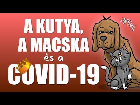 A kutya, a macska és a COVID-19