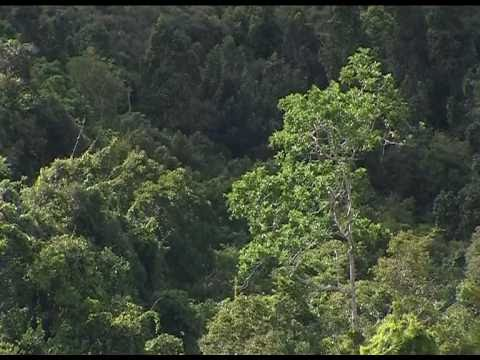 State of the World's Forests 2011: regenerating forests in the Philippines