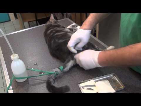 ANIMAUX. Stérilisation D'un Chat