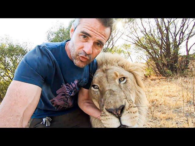 Early Morning Lion Walk with Vayetse, Ginny and Livy | The Lion Whisperer