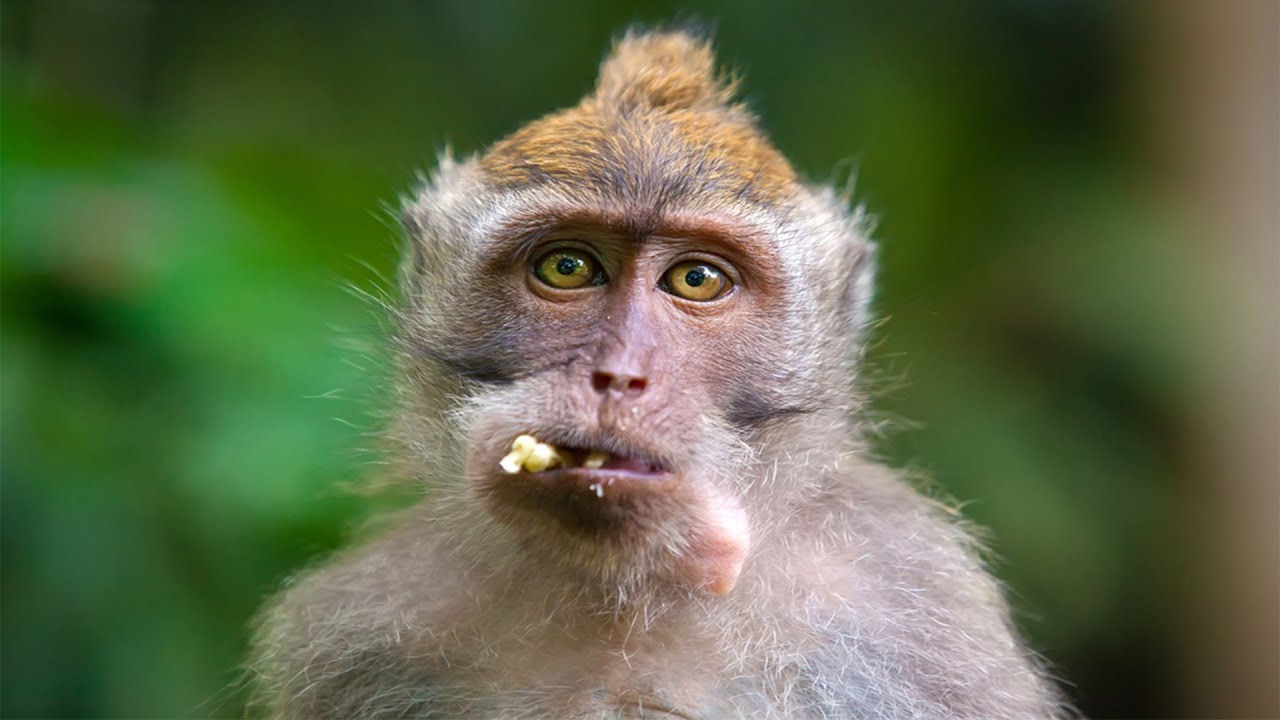 Maymunla Maymun Olmak Dunyanin En Garip 10 Maymun Turu Youtube