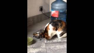 Если кошка ест лапой... значит ей просто не дали вилку!