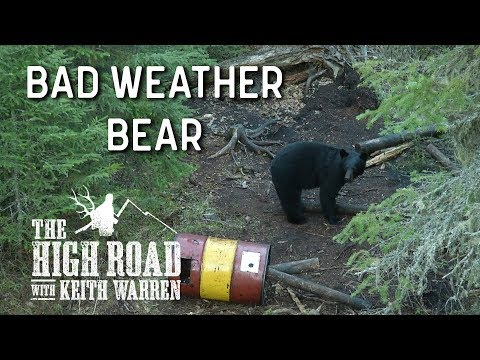 Bad Weather Bear Air Rifle Hunting | The High Road with Keith Warren
