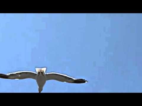 Banu Kırbağ ... Sevgi Kuşun Kanadında