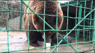 The only bear in the world is an alcoholic. Единственный в мире медведь - алкоголик.