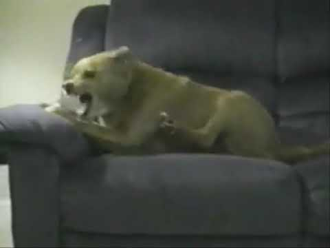 Dog Tries To Steal Bone With Own Leg Youtube