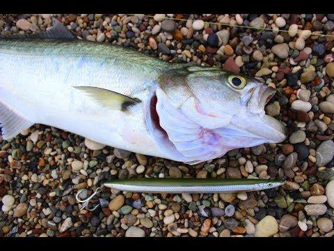 Savage Gear Line Thru Sandeel İle Lüfer / Kofana Avı ( Bluefish On LT Sandeel )