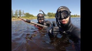 Šoreiz ar Andi dodamies izmēģināt Daugavu dienakts gaišajā laikā kad ūdens ir ļoti silts. Saules stari traucē ļoti un siltais ūdens kuru temperatūra ir ap 21*C spieda zivis doties dziļuma kur man viņas neredzet.  Atceramies to, ka ne vienmēr katras medības ir veiksmīgas. Bieži paliekam bez loma.  Neliela pateicība PayPal - https://www.paypal.me/RolandsMatisons   ROLISS feisītī - https://www.facebook.com/RolissStreelnieks  ROLISS Instagram - https://www.instagram.com/rolissstreelnieks  Reitings - https://socialblade.com/youtube/c/roliss  #Roliss #streelnieks #zemudensmednieks #zemudensmedibas #underwaterhunting #spearfishing #Daugavas #upe #river #Scorpena #gopro  Filmed by: GoPro Hero 5 SESSION