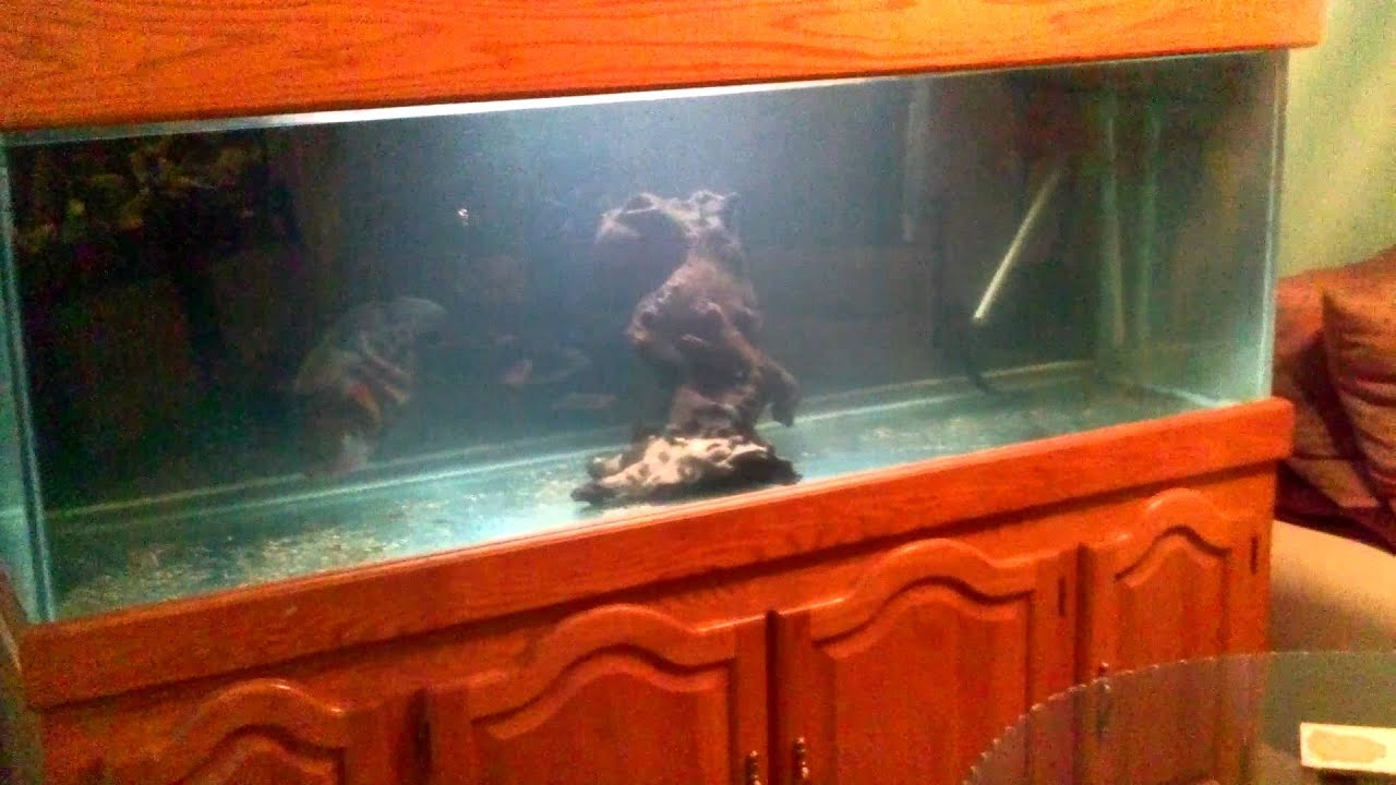 Intro to the new 180 gallon monster fish tank youtube for 180 gallon fish tank