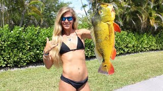 Florida Peacock Bass Fishing feat. HOW TO Tips