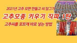 고추씨 직파 1탄 모판만들고  품종 선택 칼라위너 케이칼탄 씨담그기 고추 모종키우기 [고추재배기술]