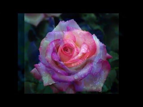 !!! Невероятно красивые цветы фото - Flowers photo