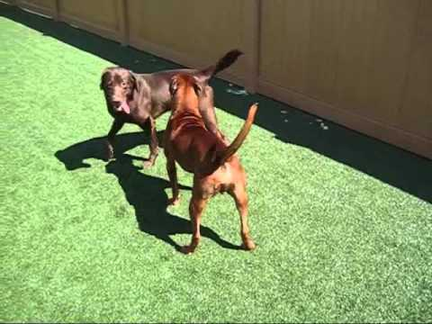Understanding Dog-Dog Communication - Calming Signals