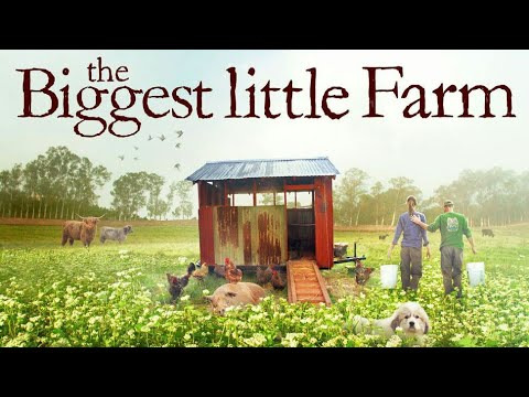 The Biggest Little Farm (2019) | Movie Clip HD | Piglets And Chicken Confusion | Documentary Film